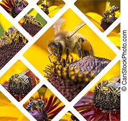 collage, viaje,  -, abeja, miel, Occidental, Plano de fondo, imágenes