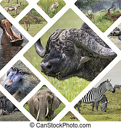 Collage of Animals from Tanzania - travel background my...