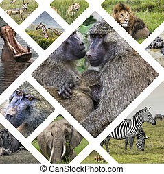 Collage of Animals from Tanzania - travel background (my...