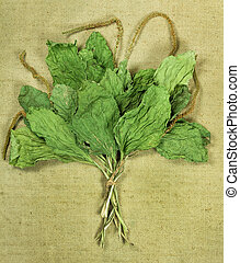PlantainDried herbs Herbal medicine, phytotherapy medicinal...