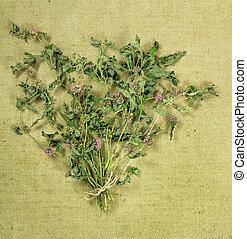 MintDried herbs Herbal medicine, phytotherapy medicinal...