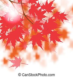 Red maple leaves on the branches. Japanese red maple....