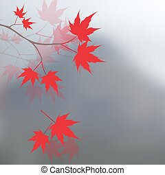 Red maple leaves on the branches. Japanese red maple on a...