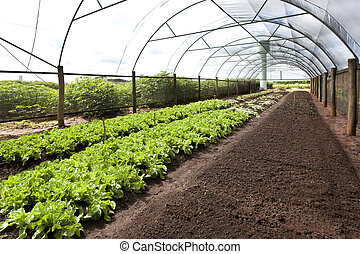 Organic agriculture in greenhouses.