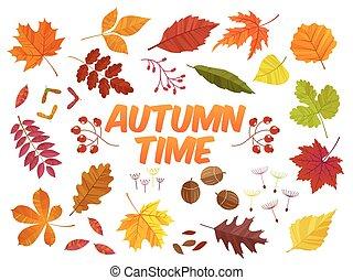 Color autumn leaves on white background. Fall leaf set. Vector illustration EPS10