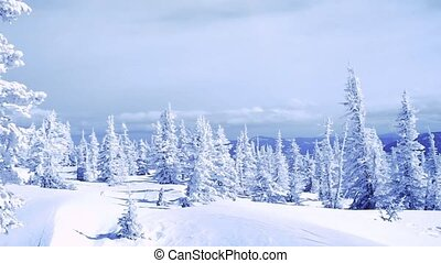 Winter trees in mountains covered with fresh snow in slow...