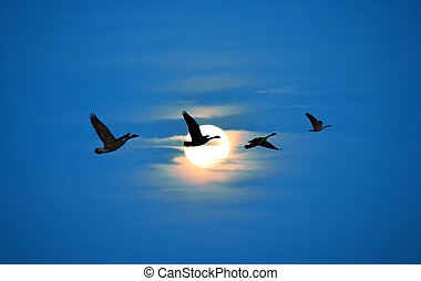 Birds flying against blue sky ecology concept - Beautiful...