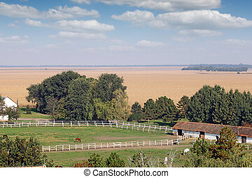 farm with horses in corral landscape
