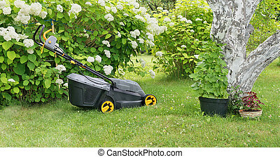 New mower nera the blossoming hydrangea bush - VILNIUS,...