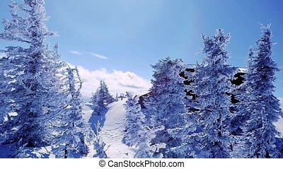 Winter trees in mountains covered with fresh snow and cute...