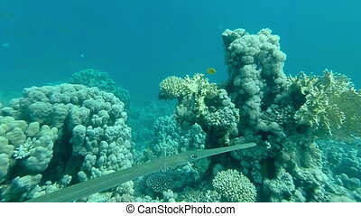 Underwater coral reef landscape with colourful fish