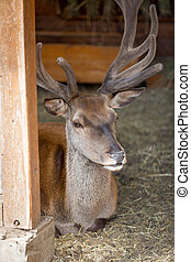 Closeup image of beautiful deer - Closeup image of beautiful...