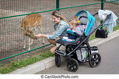 Smiling mother feeding deer through fence on the zoo -...