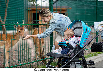 Mother and baby boy feeding animals through fence in the zoo