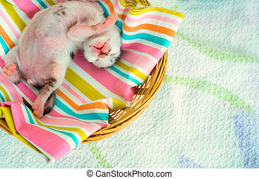 3 Days old Kitty in a Basket