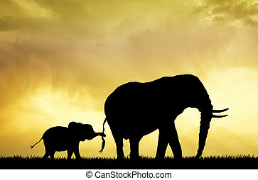 baby elephant at sunset