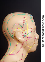 Medical acupuncture model of human head on black background