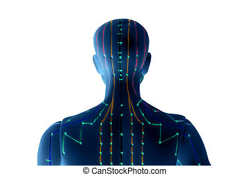 Medical acupuncture model of human on white background -...