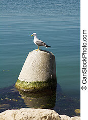 Seagull - Beautiful white seagull on a background of the...