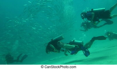 divers near shoal - dive students with instructor in shallow...