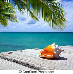 Sea shell on wooden background and palm leaf. - Sea shell on...