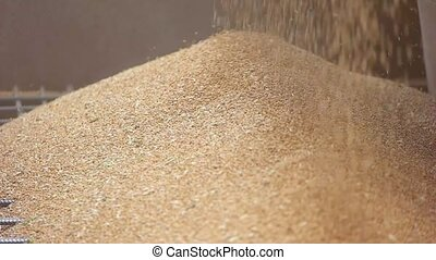 Grains falling on a pile. Grain of yellow color....