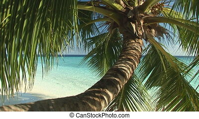maldives1 - beautiful palmtree on tropical beach