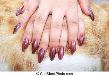 Woman hands on cat fur background.