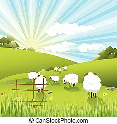 sheeps - illustration, white sheeps on pasture on solar sky