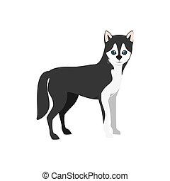 siberian husky dog - siberian husky breed dog canine pet...
