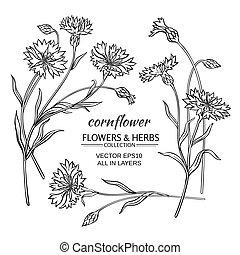 cornflower vector set - blue cornflower vector set on white...