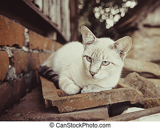 Grey cat outdoors - Cat sitting on the old bricks outdoors