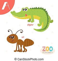 lindo,  Abc, animales, carta, divertido, animales, libro,  vector, Un, caricatura