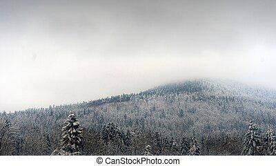 abete, albero, nevoso