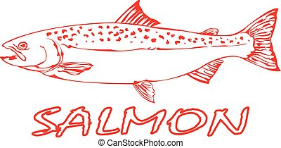 Salmon Fish - Outline of a Salmon Fish