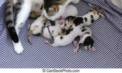 Mom Cat and Baby Kitties