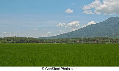 Motion along Ground Road by Rice Field against Hill Blue Sky...