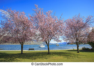 pink flowers blooming in ,beautiful scenic in lake wanaka...