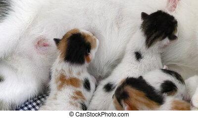 Little Kitties Feeding