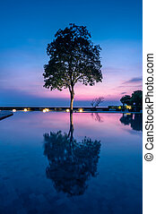silhouette of beautiful tree with reflection on sunrise