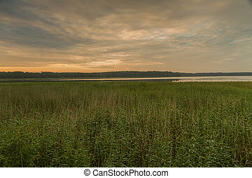 Reeds in evening - Small lake in the evening, at sunset...