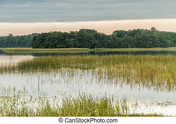Reeds in lake - Small lake in the evening, at sunset during...