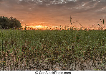 Sunset from reeds - Small lake in the evening, at sunset...