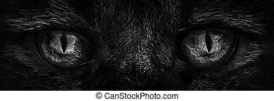 shaggy monster eyes closeup