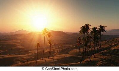 palms in desert at sunset