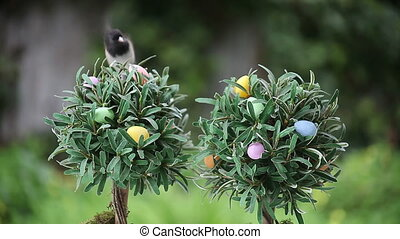 bird on top of Easter egg tree - a dark-eyed junco raises...