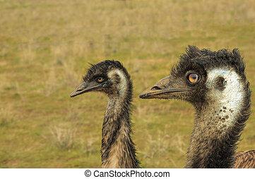 dos, emus
