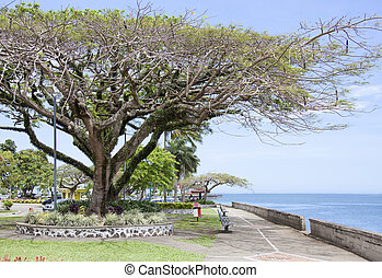 Suva Town Parks - Tropical walkway along the shore in Suva,...