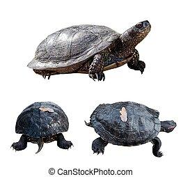 Set of turtles.