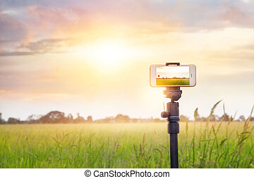 Smartphone on tripod record timelapse in the sunset nature...
